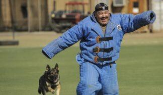 Dog attack prank in budapest